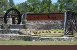 Carolina Orchards